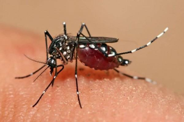diệt muỗi an toàn