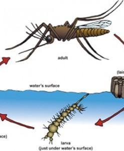 Diệt muỗi hiệu quả